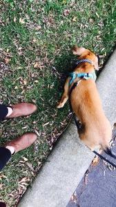 doggywalk